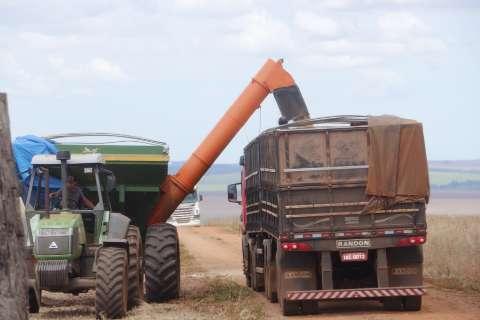 Área plantada cresce, mas clima afeta milho e produção de MS cai 11%