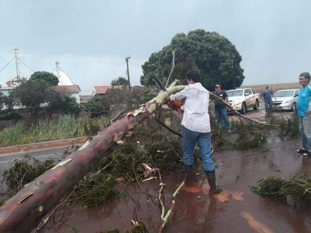 Árvore caiu sobre pista em rodovia (Foto: Direto das Ruas)