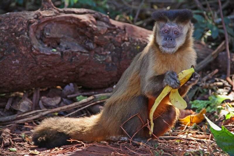 Macaco-prego virou atração no local. (Foto: Marcos Ermínio)