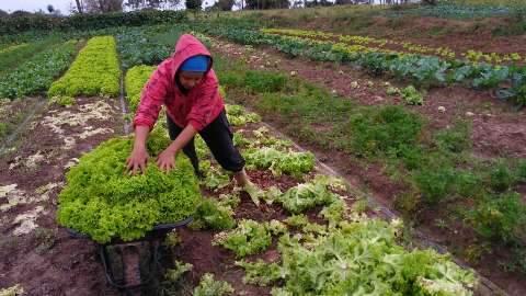 Agricultura familiar teve investimento de R$ 106 milhões em 2017, diz Agraer