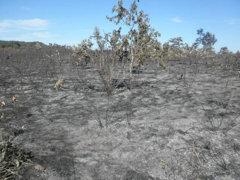 Proprietários dos demais lotes mobilizaram-se para extinguir o incêndio (Foto: divulgação PMA)