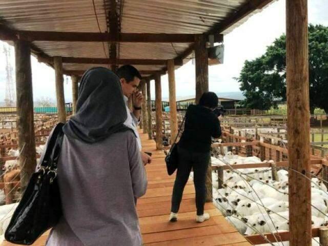 Equipe da Indonésia visitou propriedade rural em Campo Grande nesta semana (Foto: Divulgação)