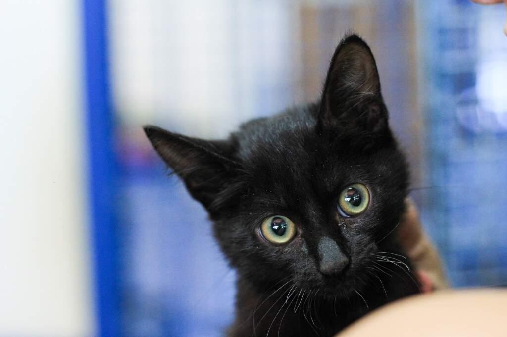 Gato preto mais charmoso, né? (Foto: Marina Pacheco)