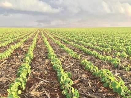 Chuvas espaçadas fazem plantio da soja atingir metade da área de lavoura