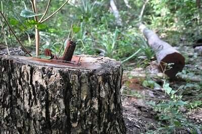 Carvoarias são obrigadas a ter florestas próprias para preservar meio ambiente (Foto: Divulgação/MPF-MS)