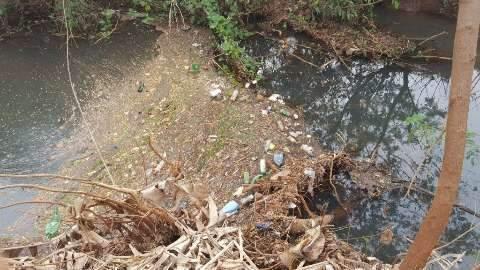 Após pedido de socorro, ação ambiental planta mudas em área no Lagoa