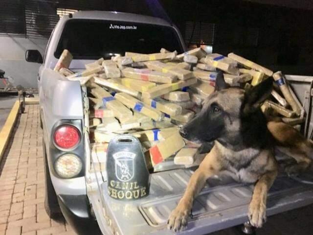 Droga foi encontrada por cão farejador da Equipe Choque Canil, do 4º BPM de Maringá (Foto/Divulgação: PF)