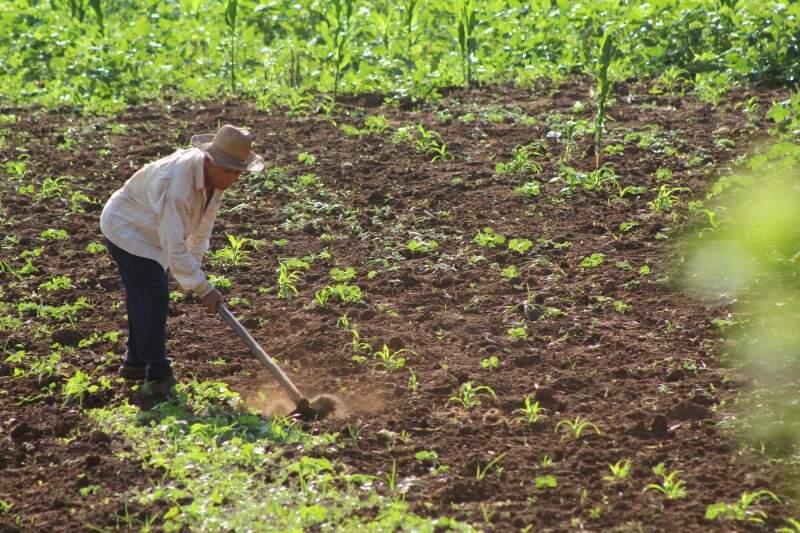 Eis a foto do presente: a força que os 69 anos não negam à enxada fazem com que a poeira do solo se levante... (Foto: Marcos Ermínio)