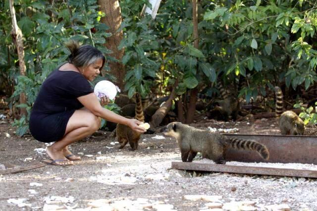 Cleo dos Santos mora em frente a uma reserva ambiental e não deixa de cuidar dos quatis. (Foto: Cleber Gellio)