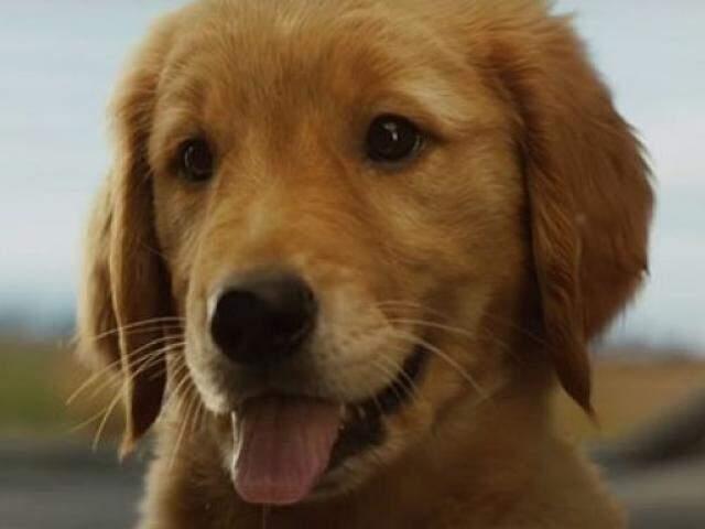 Enzo é cachorro que foi adotado por piloto de corrida. (Foto: Divulgação)