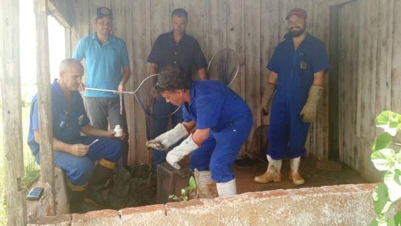 Equipe realizando a captura dos morcegos encontrados. (Foto: Divulgação)