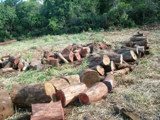 Foram apreendidos 144 m³ de madeira ilegal (Foto: Divulgação)