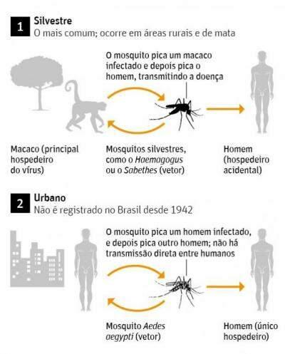 Ciclos de Transmissão e tipos da febre amarela: silvestre e urbana.