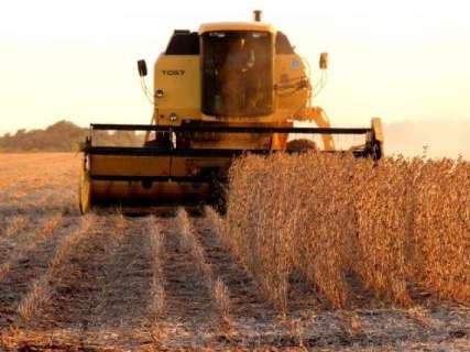 Vazio sanitário começa em MS e cultivo da soja volta só em setembro