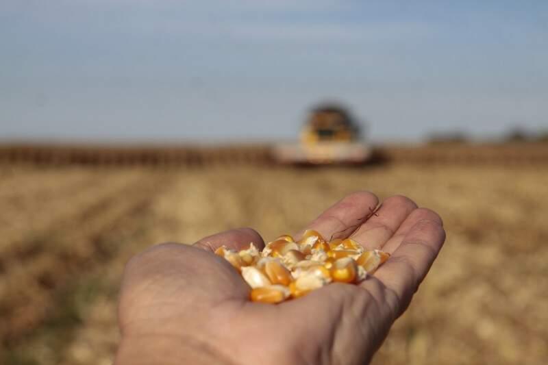 Plantio do milho começa só a partir de fevereiro e boa parte pode ficar fora do zoneamento (Foto: Arquivo/Cleber Gelio)