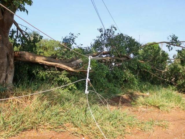 Temporal derrubou árvores sob fio de alta tenção deixando bairros sem energia (Foto: Kisie Aionã)