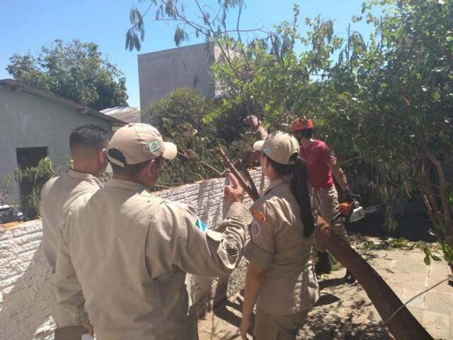 Árvore destruiu parte do muro entre casas no Estrela do Sul (Foto: Mirian Machado)