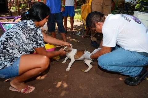 Nova fase de imunização contra a raiva animal começa na terça-feira
