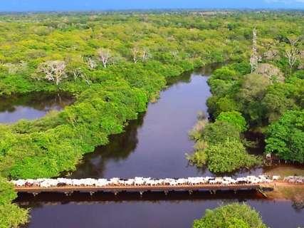 Dos pontos monitorados, rio Paraguai é o que mais preocupa Defesa Civil