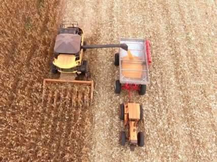 Com números mais drásticos, IBGE aponta quebra de 33,4% na safra de milho