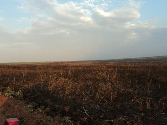 No total foi queimada uma área de 354 hectares. (Foto: divulgação)