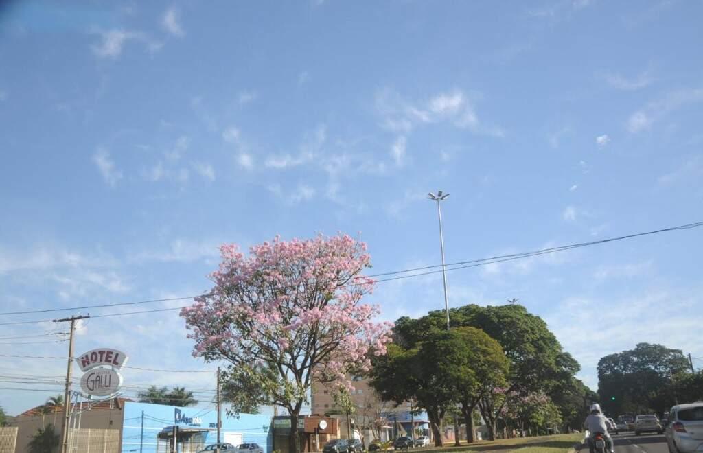 Depois de domingo, mudança do clima em Campo Grande permanecerá por 2 dias. (Foto: Paulo Francis)