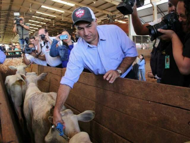 Pecuarista, governador vacinou algumas cabeças no lançamento oficial. (Foto: Marcos Ermínio)