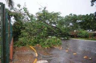 Chuva derruba ao menos 6 árvores, cinco delas sobre veículos