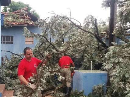 Em 2 dias de chuva, bombeiros registram 41 quedas de árvores