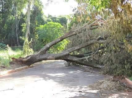 Cinco dias depois de temporal, árvore ainda bloqueia rua no Jardim Mansur