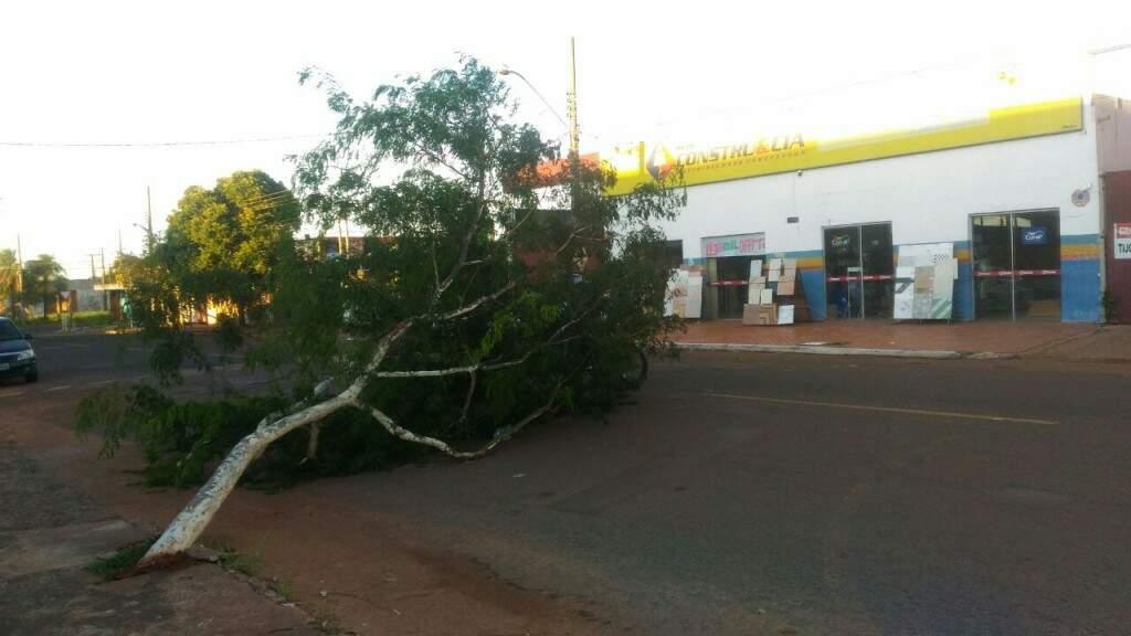 Árvore caída no meio da rua Albert Sabin (Foto: Humberto Marques)