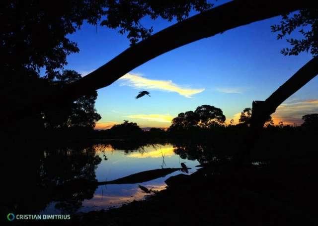 Com fauna e flora extensa, Pantanal é o bioma mais rico em biodiversidade