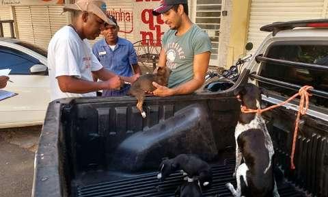 Corumbá vacina 21 mil animais contra a raiva e apura caso suspeito