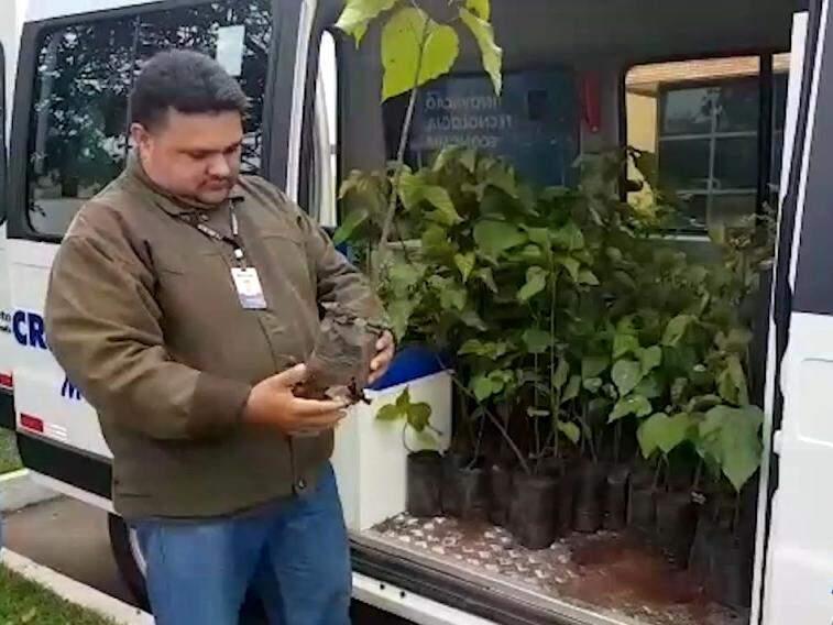 No Dia do Meio Ambiente, Crea distribui mudas para estimular plantio