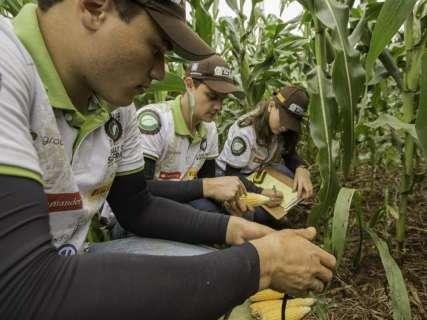 Expedição Rally da Safra avalia lavouras de milho na região sul de MS