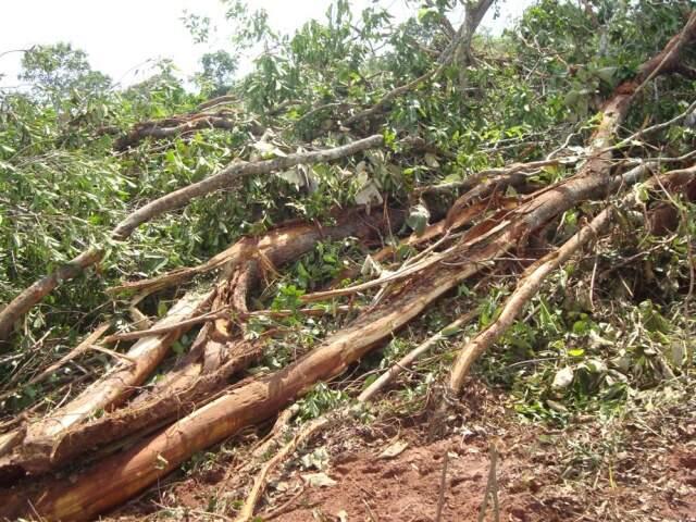 Área desmatada somou 22,8 hectares. (Divulgação PMA)