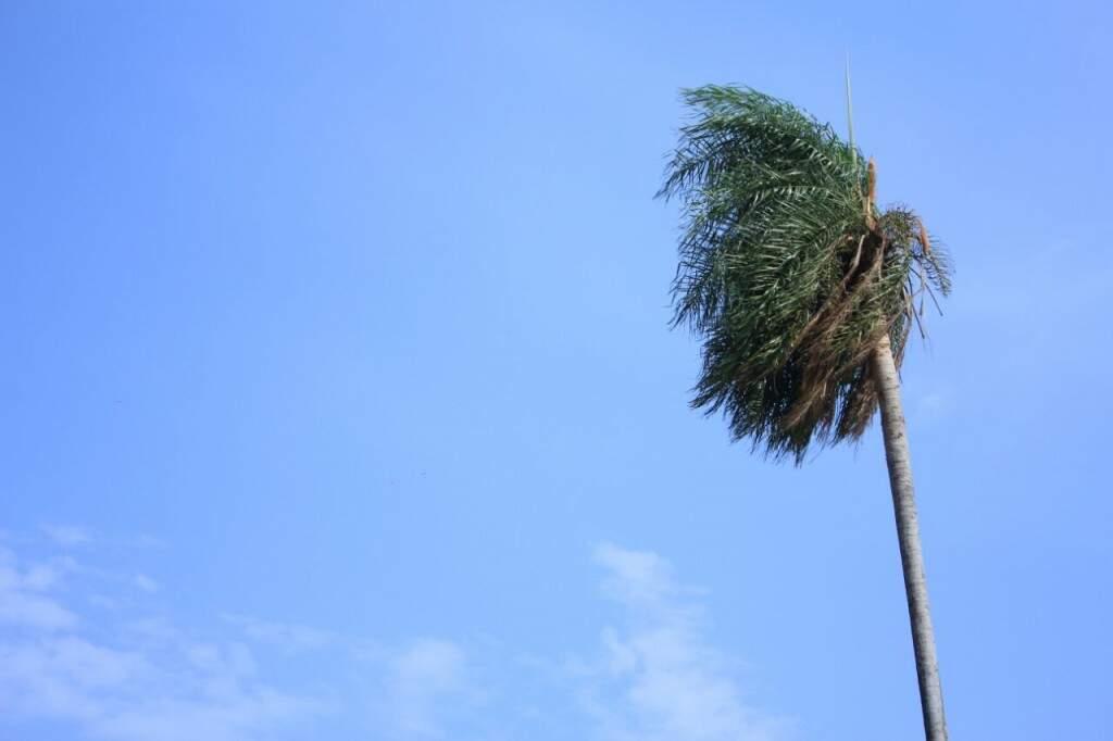 No início da manhã dessa segunda-feira, céu está limpo mas há rajadas de ventos (Foto: Marina Pacheco)