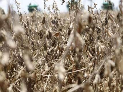 Colheita de safra recorde de soja já começou em 24 municípios de MS