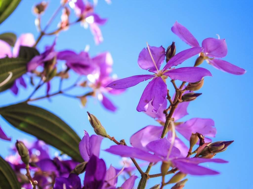 Flores na manhã deste sábado em Campo Grande (Foto: Marina Pacheco)