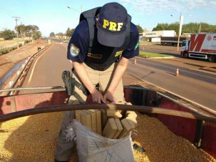 Polícia acha maconha em outra carga de milho e prende motorista e batedor