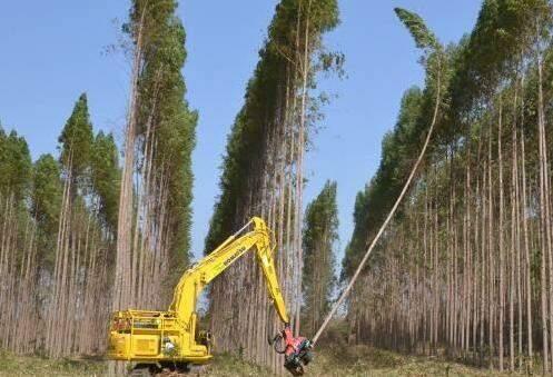 Florestas tiveram destaque no PIB Agropecuário de 2014 (Foto: Arquivo)
