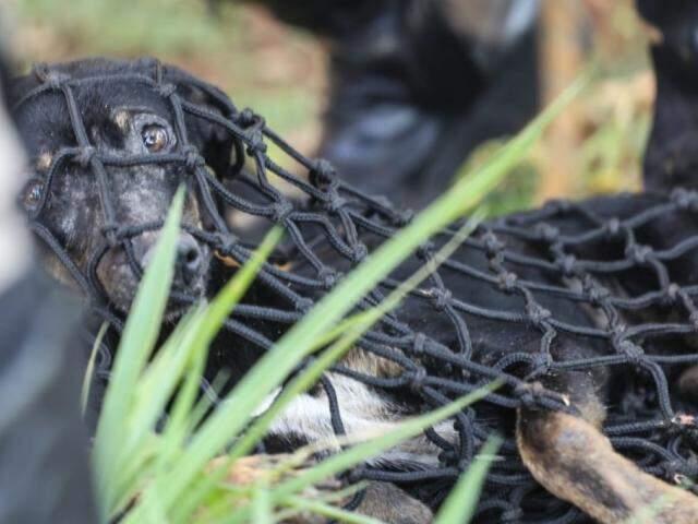Cachorro resgatado foi levado para clínica (Foto: Marcos Maluf)