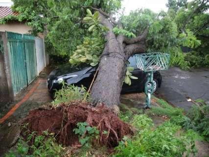 Árvore cai, compromete rede elétrica e atinge carro na Vila Nasser