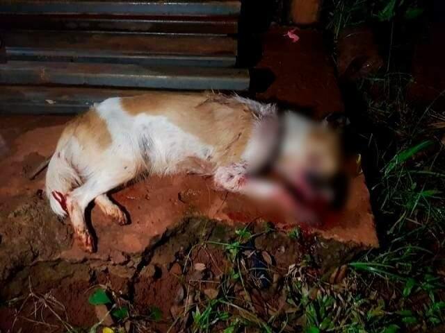 """Cadela """"Miska"""" foi agredida a pauladas enquanto procurava comida em meio ao lixo (Foto: Ong Abrigo dos Bichos)"""