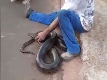 Sucuri de 7 metros é capturada por moradores na rua e vira assunto na cidade