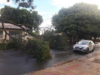 Chuva de 15 minutos derruba árvore e bloqueia rua na Vila Carlota
