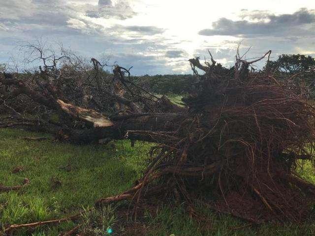 PMA multa fazendeiros em R$ 43,5 mil por desmatamento em 4 municípios
