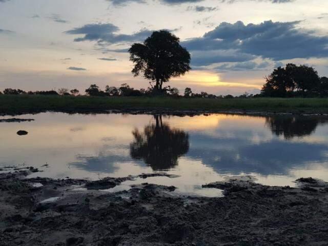 Delta é muito semelhante às planícies alagadas do Pantanal (Foto: Arquivo Pessoal)