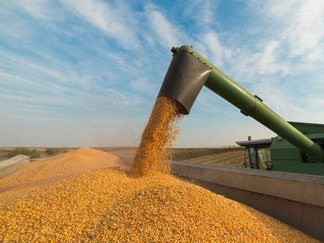 POordução de soja será recorde este ano no Estado, superando 10 milhões de toneladas. (Arquivo)