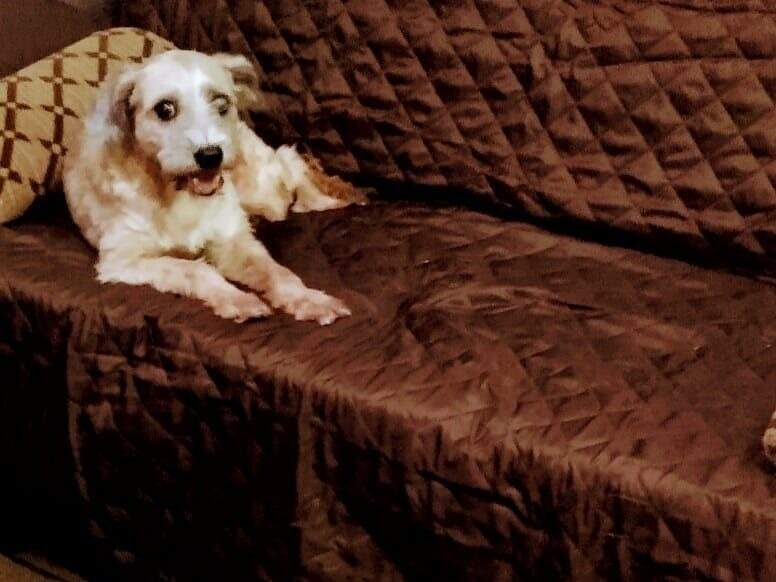 Bethovem deitado no sofá da casa esperando pelo amigo. (Foto: Arquivo pessoal)
